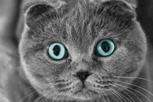 Дерматит у кошек