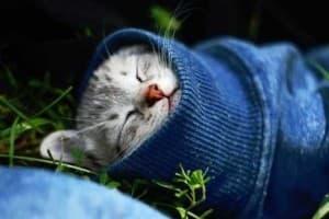 Простуда у кошек
