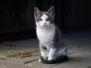 Причины судорог у кошки