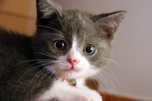 Защищаем жизнь кошки во время ремонта