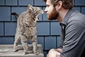 агрессивный котёнок