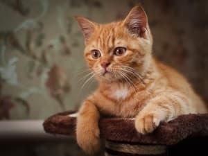 безумный котик