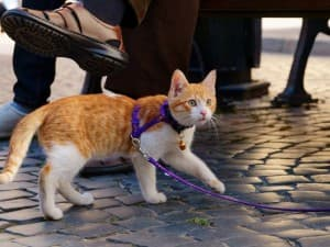 котик на выгуле