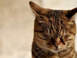 красивый котик с закрытими глазками