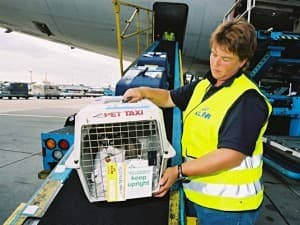 перевозят в самолете котика