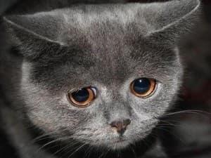 маленький грустный котик