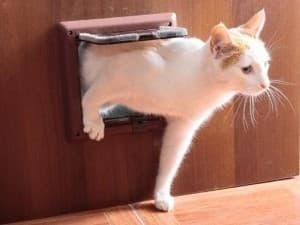 врезная дверца для котов