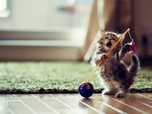 котенок играется
