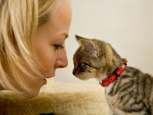 человек и котенок