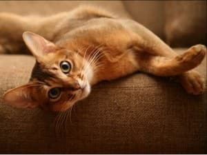 миленький котенок валяется на кроватке