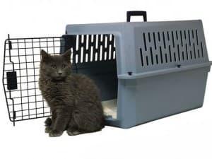 перевозят котика