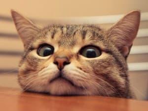 забавный котик