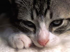 крустный лежащий котик