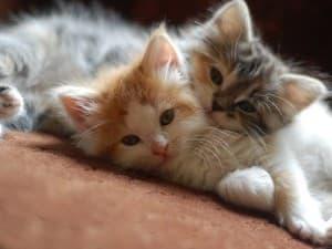 валяются на коврике два котика