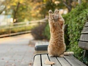 котик на природе