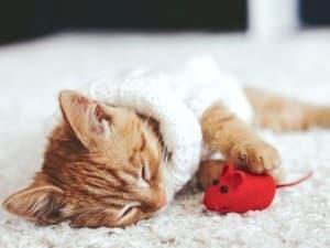 котёнок спит с игрушечной мышкой