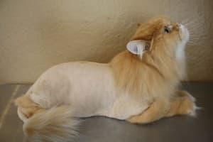 домашняя стрижка кота