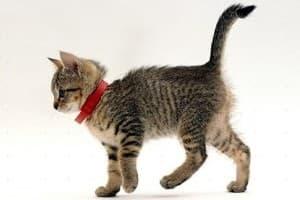 котёнок с ошейником от блох