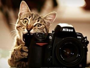 котик с фотоаппаратом