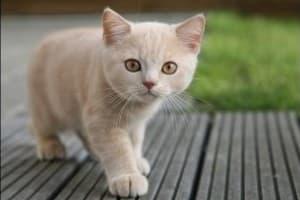 профессиональная фотография кошечки