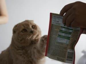 котик хочет лакомства
