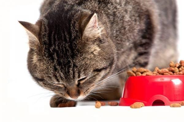 Чем кормить кошку при панкреатите читайте статью