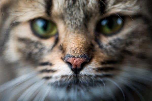 Какой должен быть нос у кошки