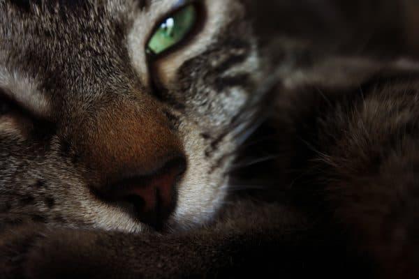 Нос у кошки