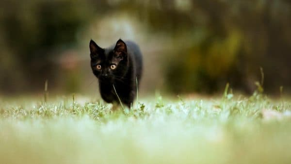 Имена для черной кошечки