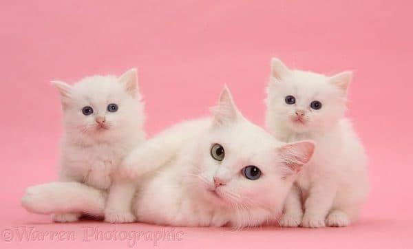 Как назвать белого котенка девочку