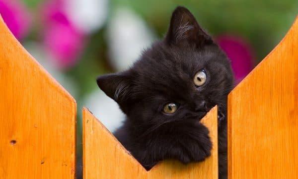 Как назвать черного котенка девочку читайте статью