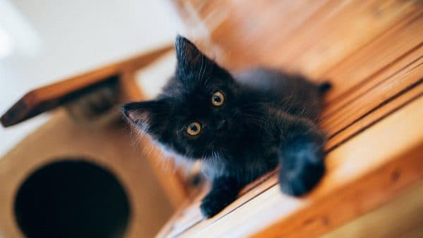 Как назвать черного котенка мальчика читайте статью