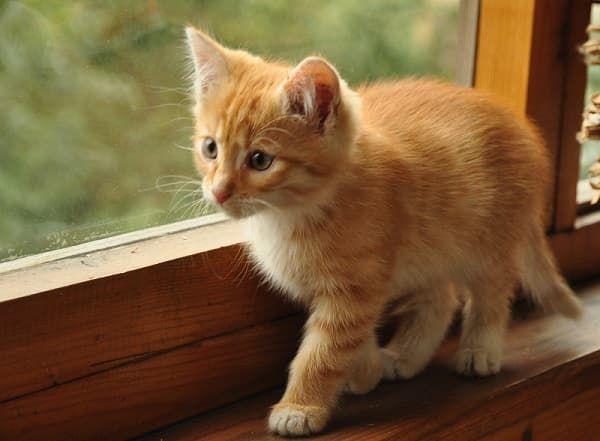 Как назвать рыжего котенка девочку