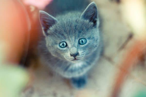 Как назвать серого котенка девочку