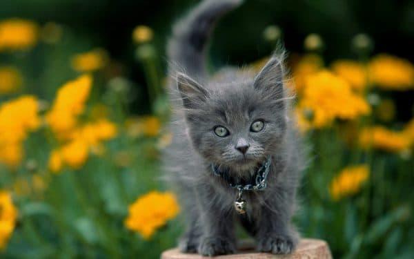 Серый малыш девочка