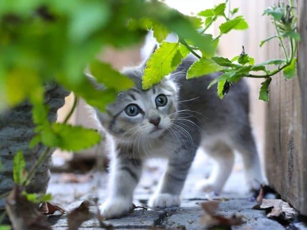 Серый милый котенок