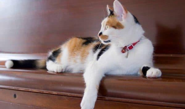 Болезни почек у кошек и котов
