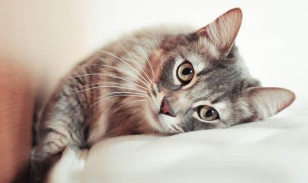 Болезни почек у кошек и котов. Что нужно знать
