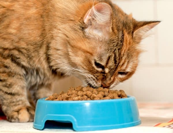 Чем кормить кота при мочекаменной болезни