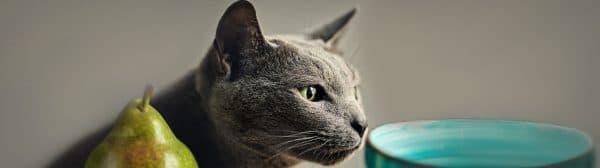 Чем кормить русскую голубую кошку читайте статью