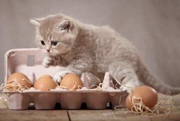 Чем нельзя кормить кошек читайте статью