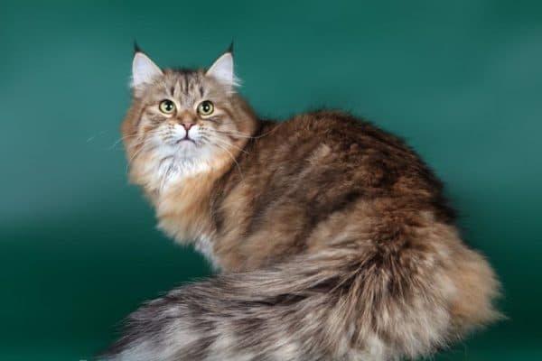 Что давать кошке на натуральном рационе