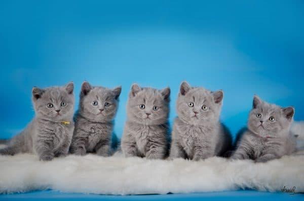 Что нельзя есть котятам