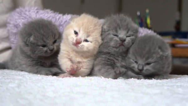 Искусственное выкармливание новорожденного котенка