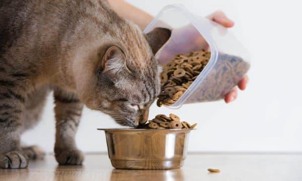 Как правильно кормить кошку читайте статью