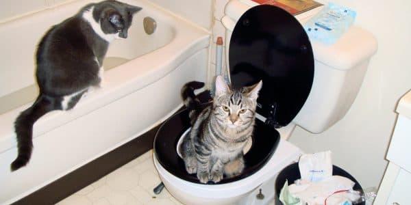 Котик ходит в унитаз
