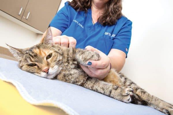 Кожные заболевания у котов