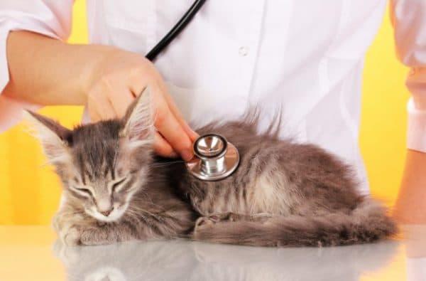 Почечная недостаточность у кошек. Причины и лечение читайте статью