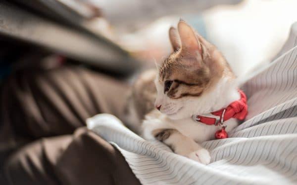 Поликистоз почек у кошек читайте статью
