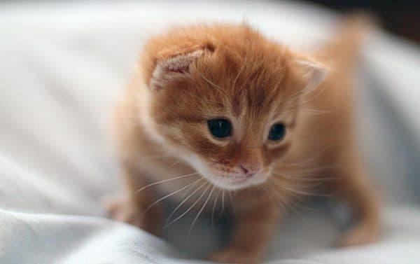 Рахит у котят. Диагностика болезни